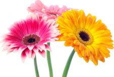 Тюмень доставка цветов круглосуточно